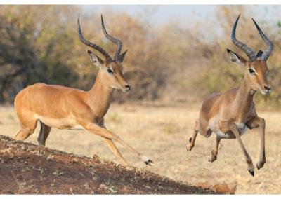 rpa-botswana-zimbabwe-zambia_0093