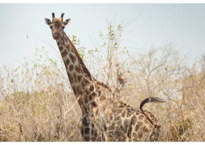 rpa-botswana-zimbabwe-zambia_0099