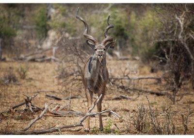 rpa-botswana-zimbabwe-zambia_0100