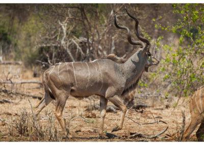 rpa-botswana-zimbabwe-zambia_0101