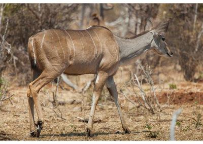 rpa-botswana-zimbabwe-zambia_0102