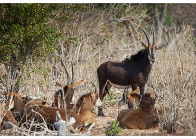 rpa-botswana-zimbabwe-zambia_0106