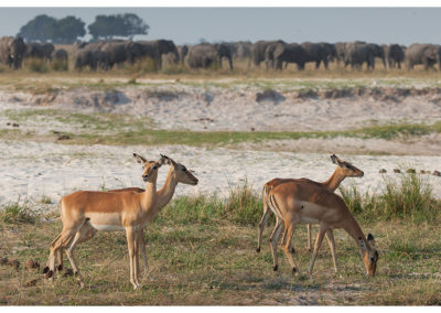rpa-botswana-zimbabwe-zambia_0109