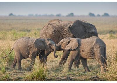 rpa-botswana-zimbabwe-zambia_0116