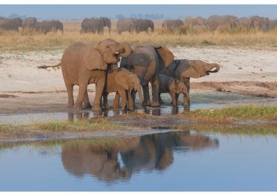 rpa-botswana-zimbabwe-zambia_0117