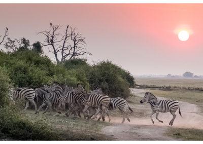 rpa-botswana-zimbabwe-zambia_0119