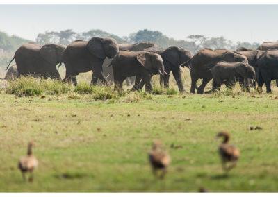 rpa-botswana-zimbabwe-zambia_0130