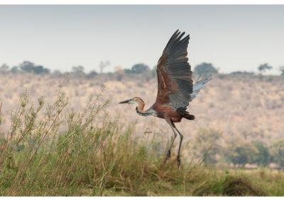 rpa-botswana-zimbabwe-zambia_0133